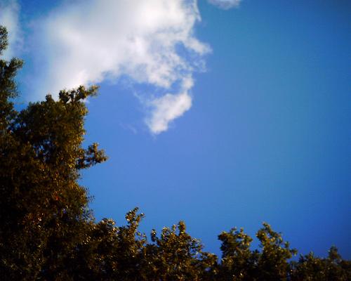 2008/10/04@代々木公園