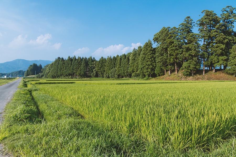 人口が減少していく日本の地方はどうなるのか